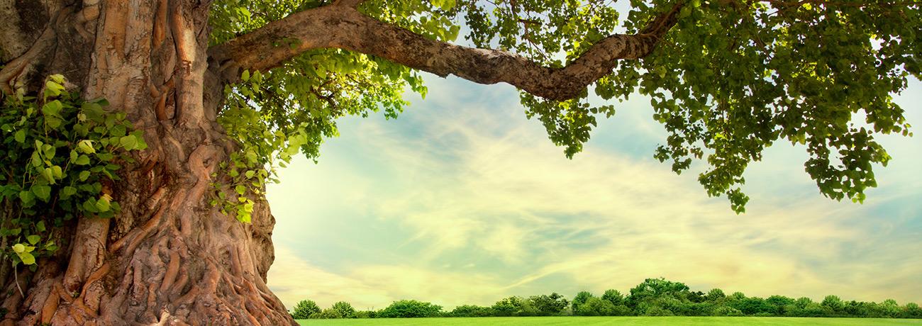 slider-tree
